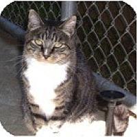 Adopt A Pet :: Winter - El Cajon, CA