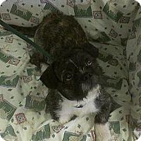 Adopt A Pet :: Rocky - Ridgely, MD