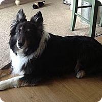 Adopt A Pet :: Bob - La Habra, CA