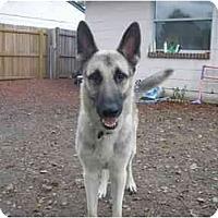 Adopt A Pet :: Boomer - Green Cove Springs, FL