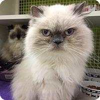 Adopt A Pet :: Kelianne - Beverly Hills, CA