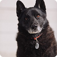 Adopt A Pet :: Newt - Portland, OR