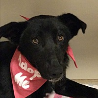 Border Collie Mix Dog for adoption in Snyder, Texas - Sally