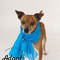 Adopt A Pet :: Goliath - Marietta, GA