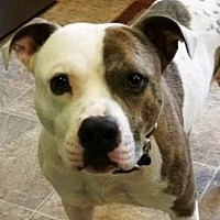 Adopt A Pet :: Hootie - Richmond, VA