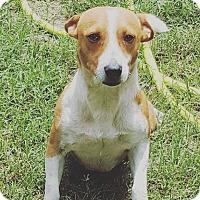 Adopt A Pet :: Benjamin - Denver, CO