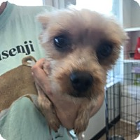 Adopt A Pet :: Paul - Sayville, NY