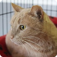 Adopt A Pet :: Murphy - Vineland, NJ