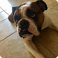 Adopt A Pet :: Taco - Odessa, FL