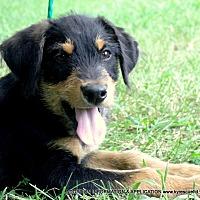 Adopt A Pet :: PJ - PRINCETON, KY