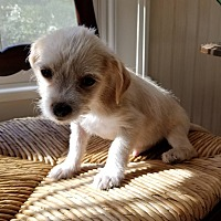 Adopt A Pet :: Wyatt - Sturbridge, MA