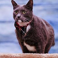 Adopt A Pet :: Sugar Daddy C1965 - Shakopee, MN