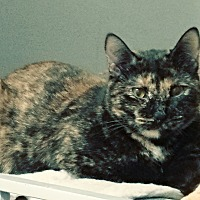 Adopt A Pet :: Toffee - Salt Lake City, UT
