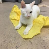 Adopt A Pet :: Sinatra - Metairie, LA