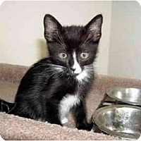 Adopt A Pet :: Baxter - Davis, CA