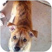 Adopt A Pet :: HELENA - Gilbert, AZ