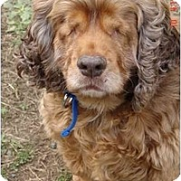 Adopt A Pet :: Stella - Tacoma, WA