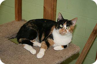 Calico Cat for adoption in Atchison, Kansas - Rita