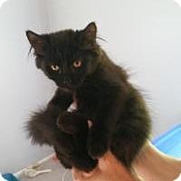 Adopt A Pet :: Coors - Raritan, NJ