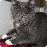 Adopt A Pet :: Xander - Santa Rosa, CA