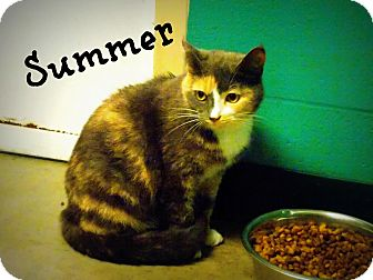 Domestic Shorthair Cat for adoption in Defiance, Ohio - Summer
