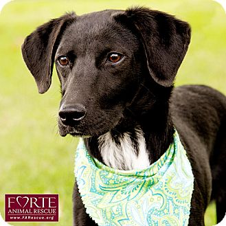 Labrador Retriever Mix Dog for adoption in Marina del Rey, California - Otto