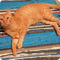 Adopt A Pet :: MR. MOM - READ HIS STORY!!! - Plano, TX