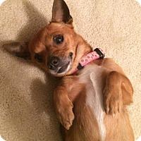 Adopt A Pet :: Gina - Savannah, GA