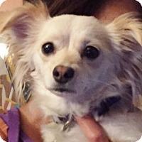 Adopt A Pet :: Sadie - Polson, MT