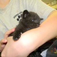 Adopt A Pet :: peanutbutter - Monticello, GA
