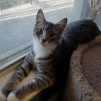 Adopt A Pet :: Tobago - Allentown, PA