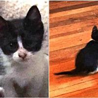 Adopt A Pet :: MAPLE SYRUP - Waco, TX
