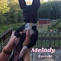 Adopt A Pet :: Melody - Hamden, CT