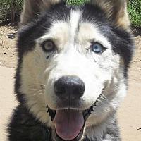 Adopt A Pet :: Taz - Pacific Grove, CA