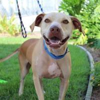 Adopt A Pet :: Wrangler - Brunswick, GA