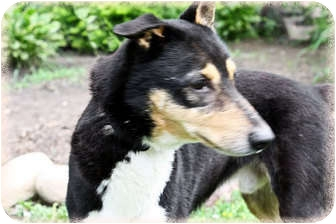 Terrier (Unknown Type, Medium) Mix Dog for adoption in Brighton, Michigan - Nelson