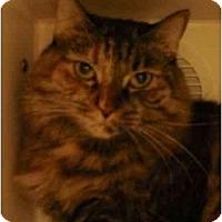 Adopt A Pet :: Sassy - Maywood, NJ