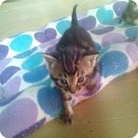 Adopt A Pet :: Kasen - Tarboro, NC