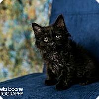 Adopt A Pet :: Dori - Eagan, MN
