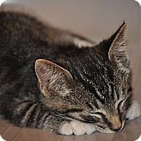 Adopt A Pet :: Tiger - Modesto, CA