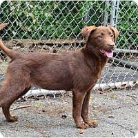 Adopt A Pet :: Jodie - Cumming, GA