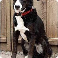 Adopt A Pet :: Polly - Portland, OR