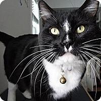 Adopt A Pet :: William - Kalamazoo, MI