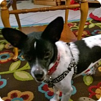 Adopt A Pet :: Billie Jo - Martin, GA