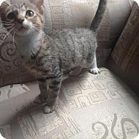 Adopt A Pet :: Butterball/Jacob - McDonough, GA
