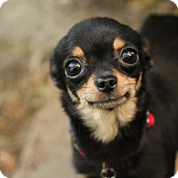 Adopt A Pet :: Piper *ADOPTION PENDING* - Romeoville, IL