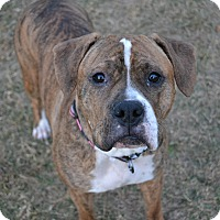 Adopt A Pet :: Presley - Lancaster, PA
