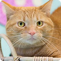 Adopt A Pet :: Nigel - Washburn, WI