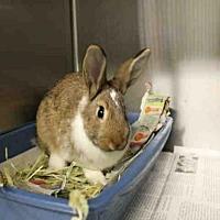Adopt A Pet :: A1685273 - Los Angeles, CA