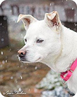 German Shepherd Dog Mix Dog for adoption in Zanesville, Ohio - 48733 Nicole sponsored $75 plus tags